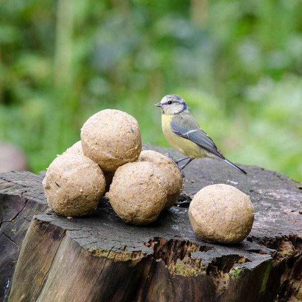 Bird Feeder Balls Small